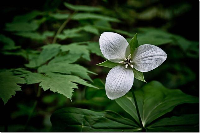 photoshare Wild Flower Marble Hill GA thelung