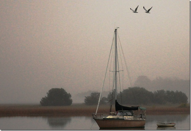photoshare gull andgull Isle O Hope GA Rigrat