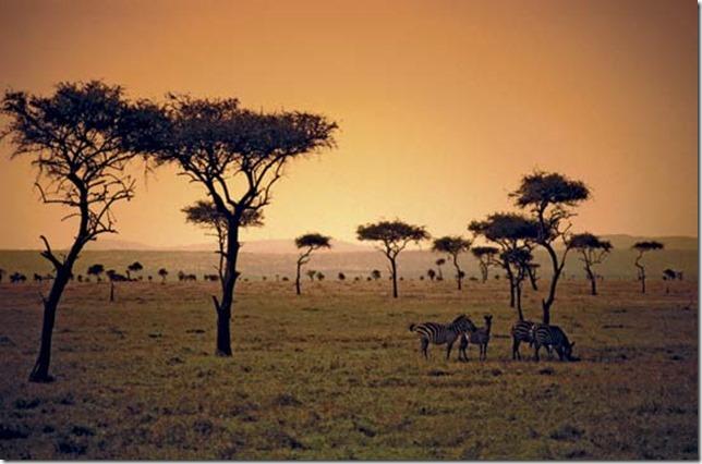 savanna-1